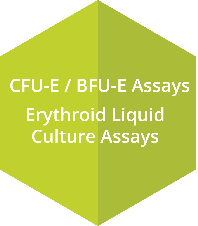 CFU-E assays, BFU-E assays, Erythroid Liqiud Culture assays