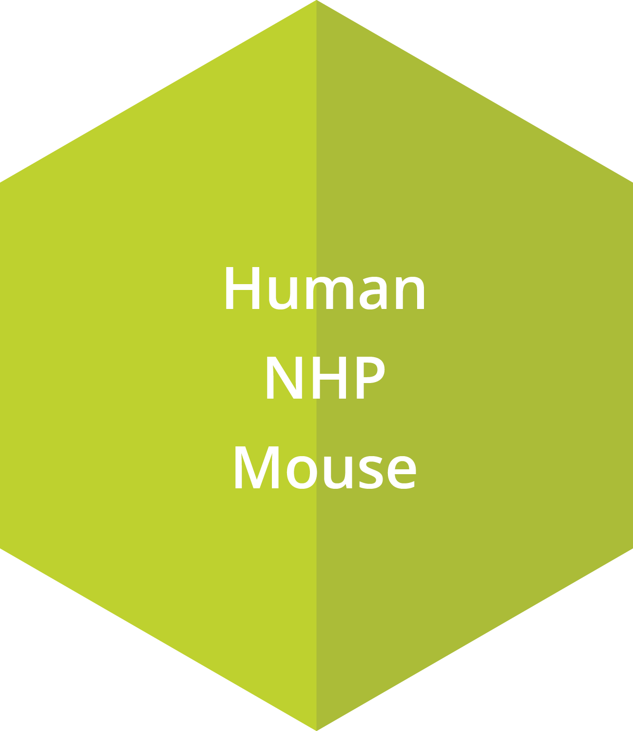 CFU- E progenitors may be cultured from human or mouse bone marrow. Our BFU-E progenitors can be cultured from bone marrow for human, NHP and mouse species.