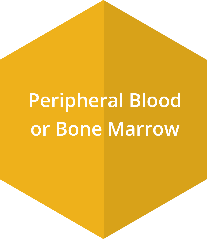 Peripheral Blood or Bone Marrow