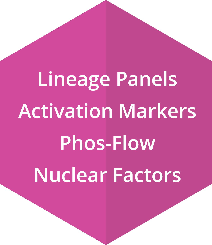 Lineage Panels, Activation Markers, Phos-Flow, Nuclear Factors