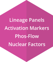 Lineage Panels, Activation Markers, Phos-Flow, Nuclear Factors