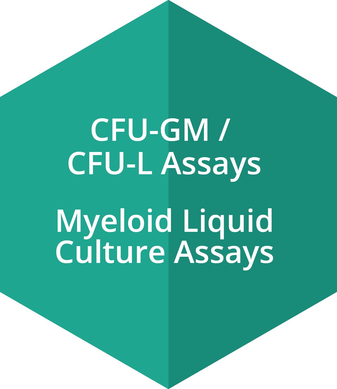 CFU-GM assays, CFU-L assays, Myeloid Liquid Culture Assays