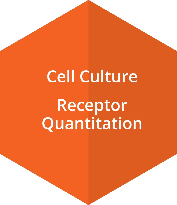 Cell Culture, Receptor Quantitation