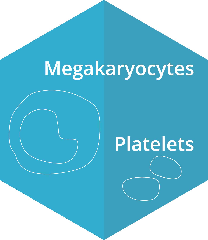 Megakaryocytes, Platelets